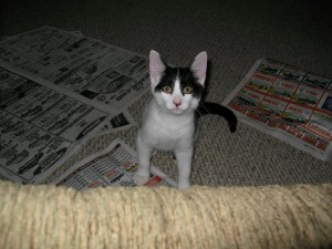 Just eight weeks old, April 28, 2007, Benny had huge ears and Tom called him Gremlin.