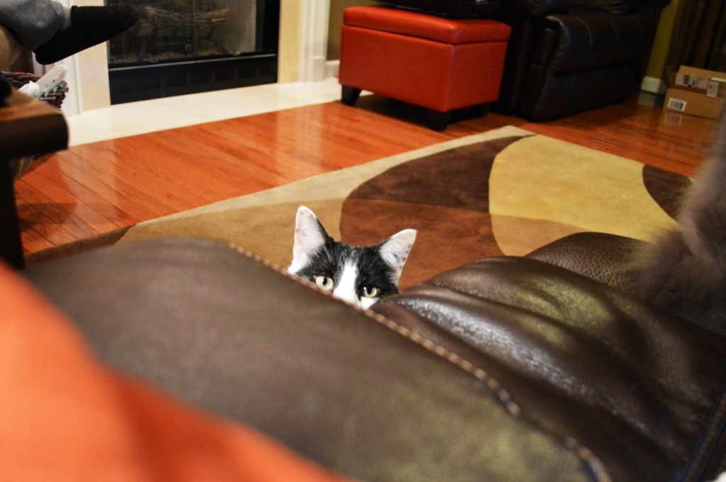 Benny is always peeking around something and up to no good! He's ready to pounce!